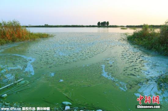 资料图:2015年太湖藻情发生时间偏晚,今年7月13日出梅以后,气温迅速升高,太湖蓝藻又一次大面积出现,又对太湖安全度夏带来巨大挑战。